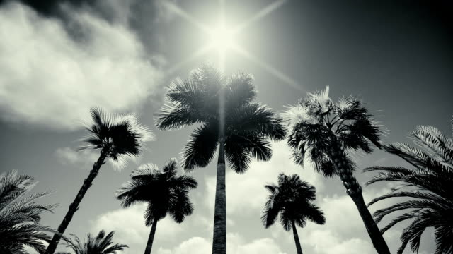 palm trees silhouette - tropical tree stock videos & royalty-free footage