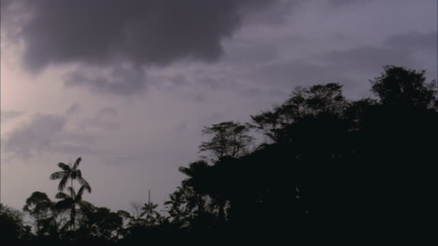 pan palm trees silhouetted against cloudy skies at dusk / french guiana, france - overcast stock videos & royalty-free footage