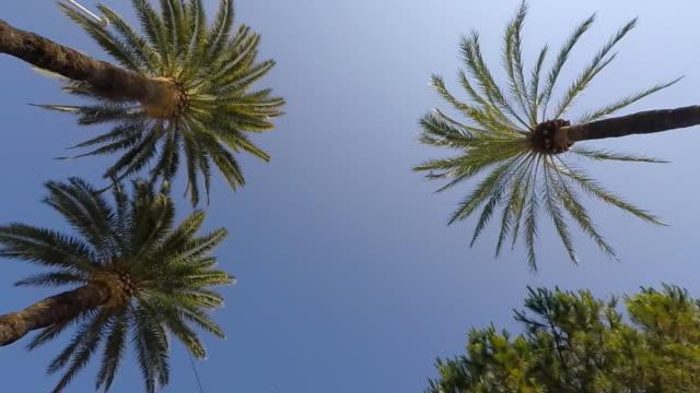 vidéos et rushes de palm trees slow motion driving - cannes