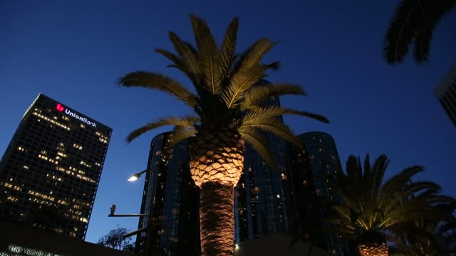 Palm trees stand at the base of the Citigroup Center in Los Angeles California at night on July 13th 2015 Shots Shots look up at Palm Trees lit up at...