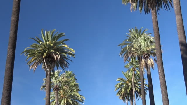 palm trees street - beverly hills stock videos & royalty-free footage