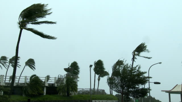 palm trees sway in powerful winds from typhoon megi as it hits taiwan on 27th september 2016 - メギ点の映像素材/bロール