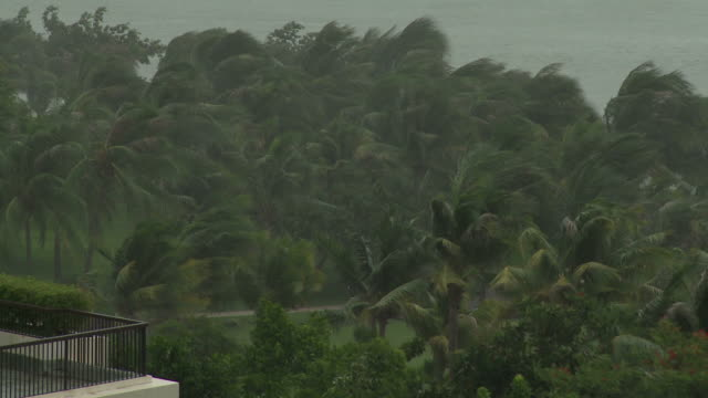 palm trees sway in strong wind as a typhoon approaches, typhoon conson, china, 16 july 2010 / audio - tropical storm stock videos & royalty-free footage