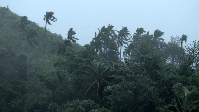palm trees sway in strong winds as powerful typhoon ramassun nears the city of legaspi philippines on 15th july 2014 - ルソン島点の映像素材/bロール