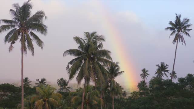 palm trees sway in the breeze as the bright rainbow in the background appears - fiji stock videos & royalty-free footage