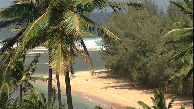 palm trees sway in the wind above a sandy beach. - isola di kauai video stock e b–roll