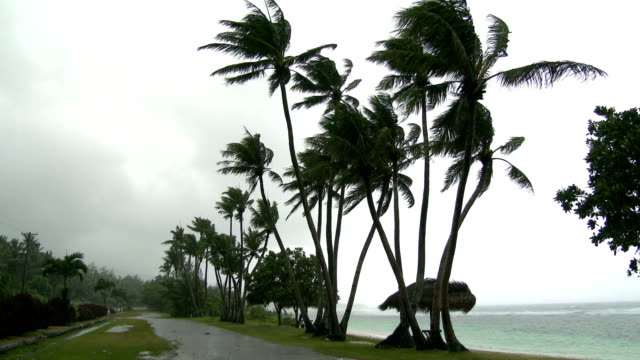 palm trees sway in wind as typhoon dolphin approaches the pacific island of rota on 15th may 2015 - グアム点の映像素材/bロール