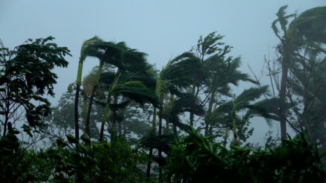 palm trees sway violently in powerful winds as super typhoon mangkhut hits the philippines - isola di luzon video stock e b–roll