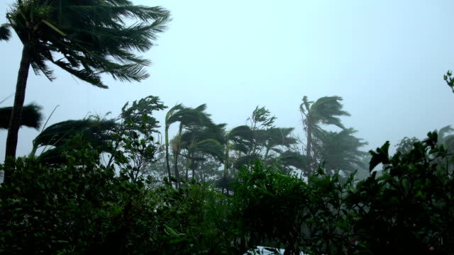 palm trees sway violently in powerful winds as super typhoon mangkhut hits the philippines - natural disaster stock videos & royalty-free footage