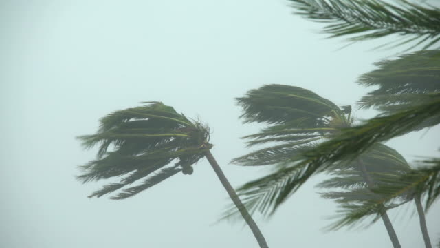 palm trees sway violently in powerful winds as super typhoon mangkhut hits the philippines - hurrikan stock-videos und b-roll-filmmaterial