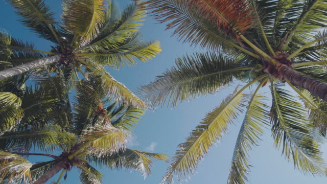 palm trees swaying in the wind - palm leaf stock videos & royalty-free footage