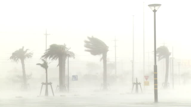 palm trees thrash in hurricane wind and rain - tropical storm stock videos & royalty-free footage