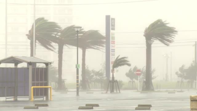 vídeos y material grabado en eventos de stock de palm trees thrash in hurricane wind and rain - huracán