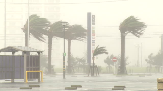 palm trees thrash in hurricane wind and rain - 集中豪雨点の映像素材/bロール