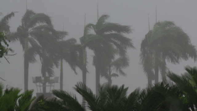 palm trees thrash in strong winds and torrential rain, typhoon conson, china, 16 july 2010 / audio. - hurrikan stock-videos und b-roll-filmmaterial