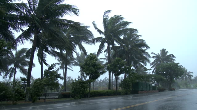 palm trees thrash in strong winds as typhoon matmo approaches taiwan on 22nd july 2014 - gale stock videos and b-roll footage