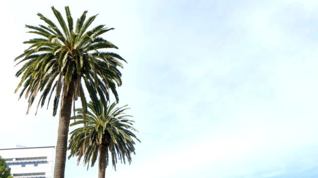 palm trees tops with light wind and sky daytime 4k video - stratus stock videos & royalty-free footage