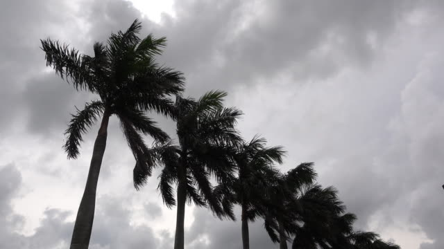 palm trees under strong wind in storm - tropical storm stock videos & royalty-free footage
