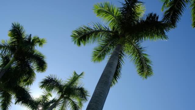 vídeos y material grabado en eventos de stock de palm trees - usa