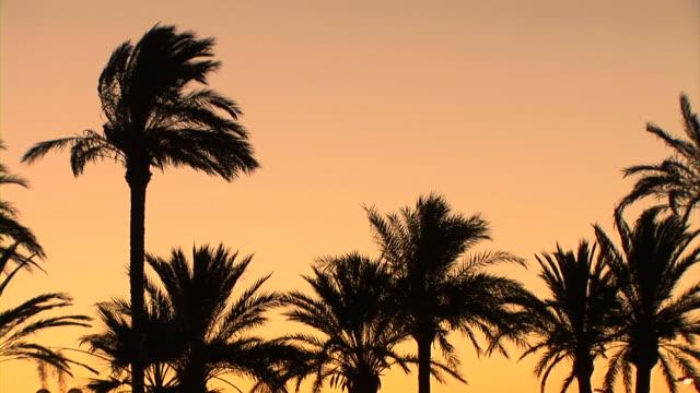 vídeos de stock, filmes e b-roll de hd: palmeiras - cannes