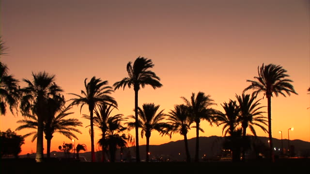 hd: palm trees - cannes stock videos & royalty-free footage