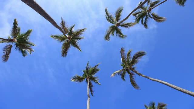 palm trees - punta cana stock videos and b-roll footage
