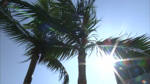 palm trees - frond stock videos & royalty-free footage