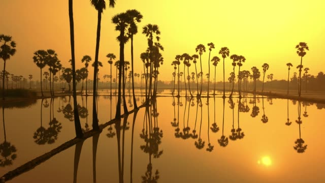 palm trees - santa barbara california stock videos & royalty-free footage