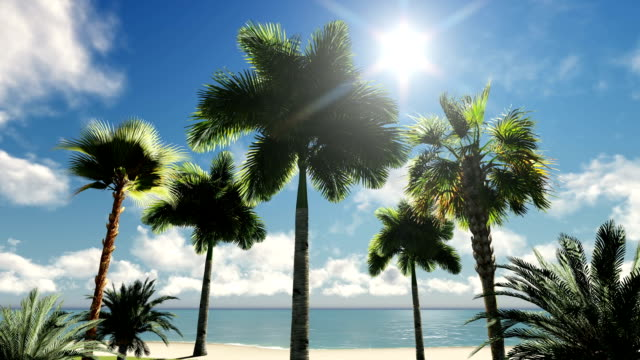 palm trees - tropical tree stock videos & royalty-free footage