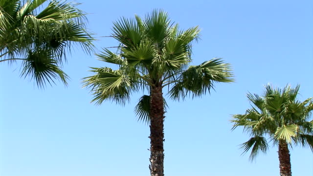 palm trees - small group of objects stock videos & royalty-free footage