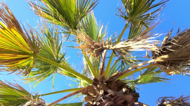 palm treetop against blue sky - tropical tree stock videos & royalty-free footage