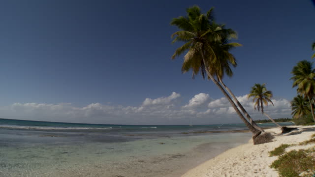 stockvideo's en b-roll-footage met ws, tu, palm tress over caribbean sea, saona island, dominican republic - caraïbische zee