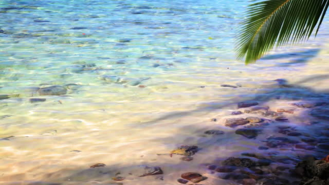 Palm twig hang down to water