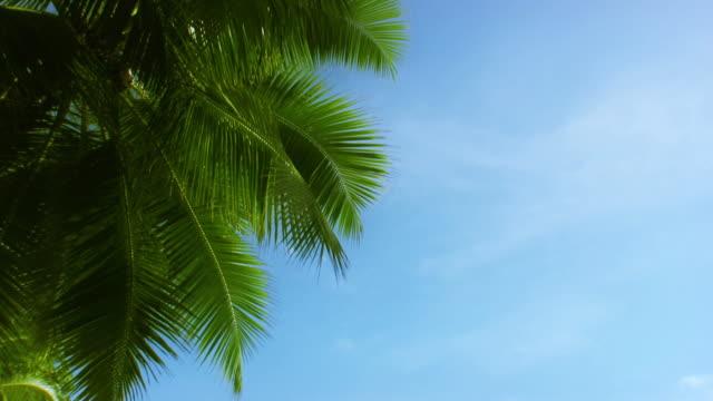 vídeos de stock e filmes b-roll de palm - folha de palmeira