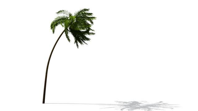 palm - palm tree stock videos & royalty-free footage