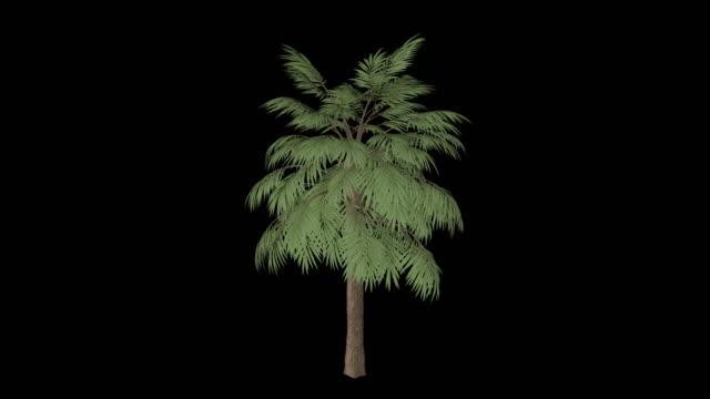 palmetto tree - palm tree stock videos & royalty-free footage