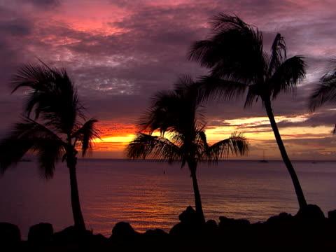 palms and distant boats - ロマンチックな空点の映像素材/bロール