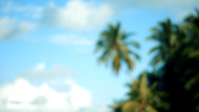 palms and sky - desert island stock videos & royalty-free footage