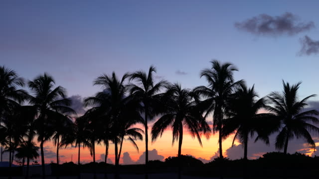 vidéos et rushes de palms at sunrise on a tropical beach - palmier