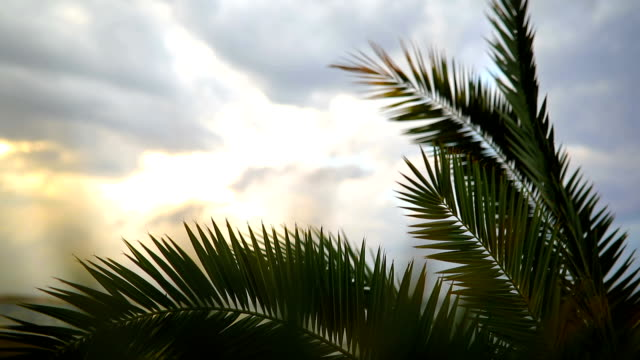 palms by the shore - palm leaf stock videos and b-roll footage