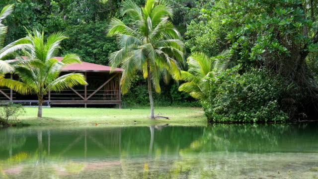 palms in a lagoon - lagoon stock videos & royalty-free footage