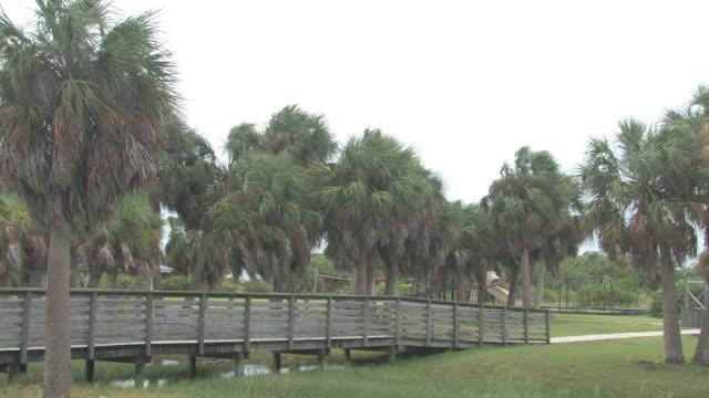 vidéos et rushes de palmiers dans le vent 2-hd 30f - arbre tropical