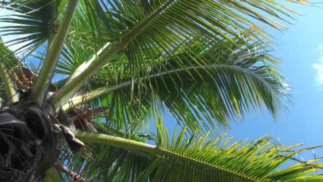 stockvideo's en b-roll-footage met palms in the wind 2 - low angle view