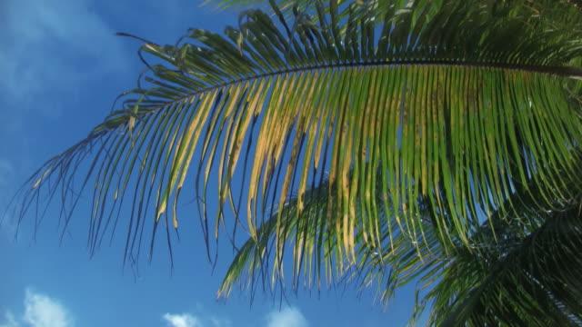Palmen im wind 7