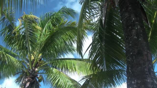 Palmen im wind 8
