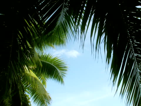 stockvideo's en b-roll-footage met palms ntsc - bedektzadigen