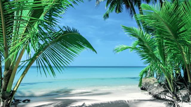 Palms on a beach. Tropical island