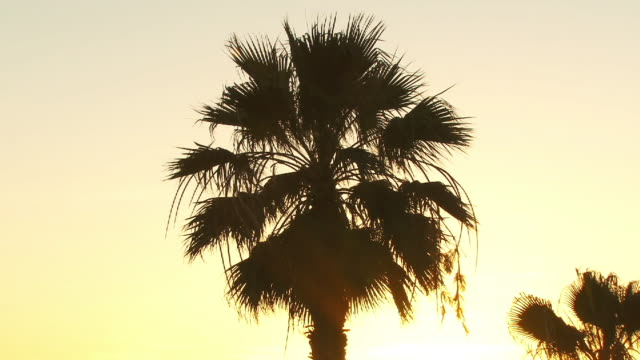 CU, ZO, WS, palms on beach at sunset, Playa de las Americas, Tenerife, Canary Islands, Spain