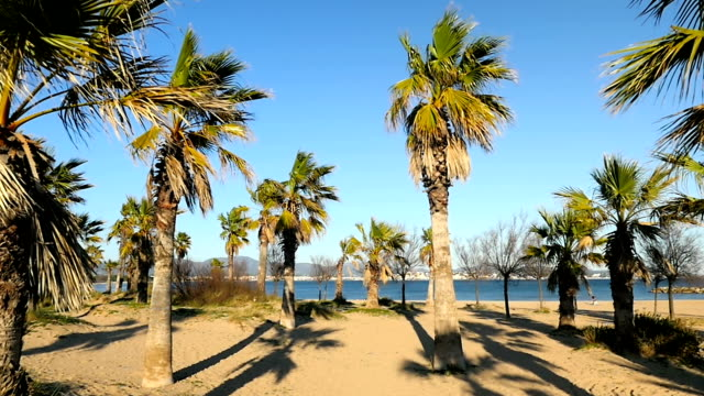 palms on beach - cote d'azur stock videos & royalty-free footage