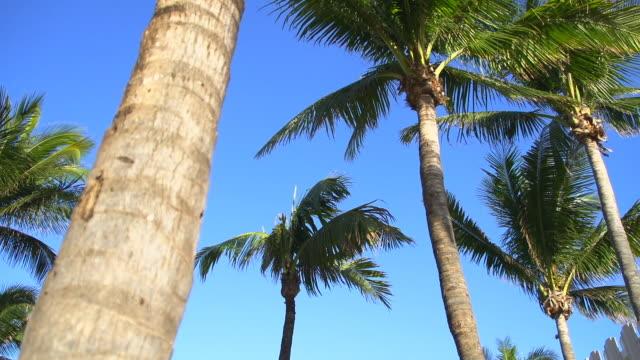 HD: Palms On Florida Beach